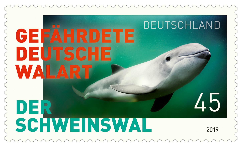 Der Schweinswal - gefährdete deutsche Walart
